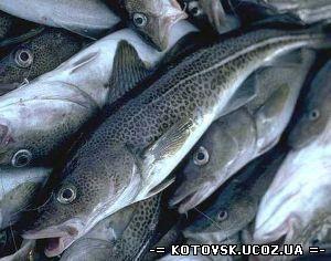 В Украине будет реформирована рыбная отрасль